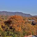 Photos: 山の黄葉3
