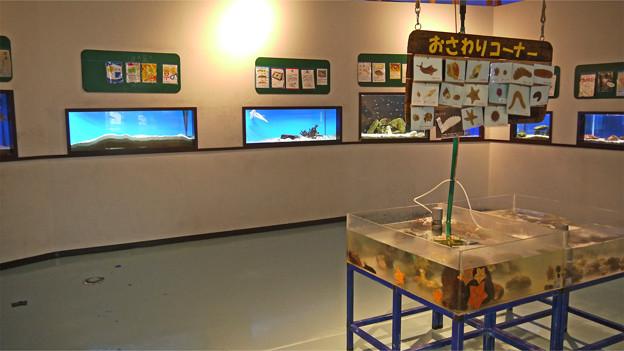 なぎさ水族館(2)