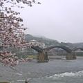 桜の錦帯橋。曇り・・・(17)