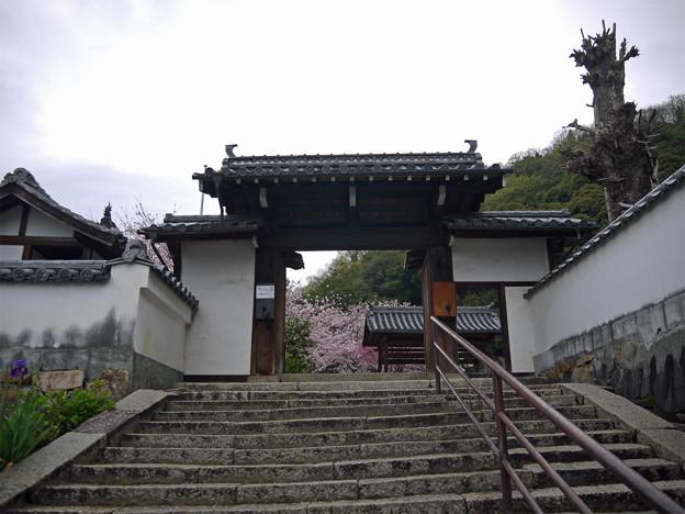 龍頭山照蓮寺(10)