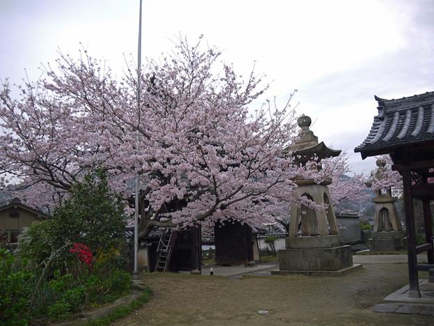 龍頭山照蓮寺(9)