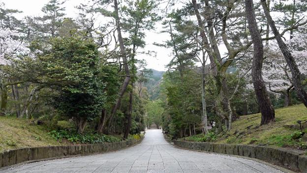 出雲大社(7)