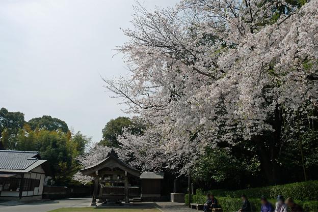 健軍神社(6)