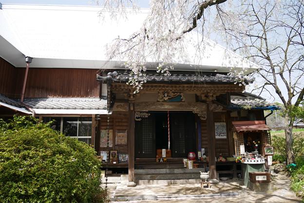 宝珠寺のヒメシダレザクラ(3)