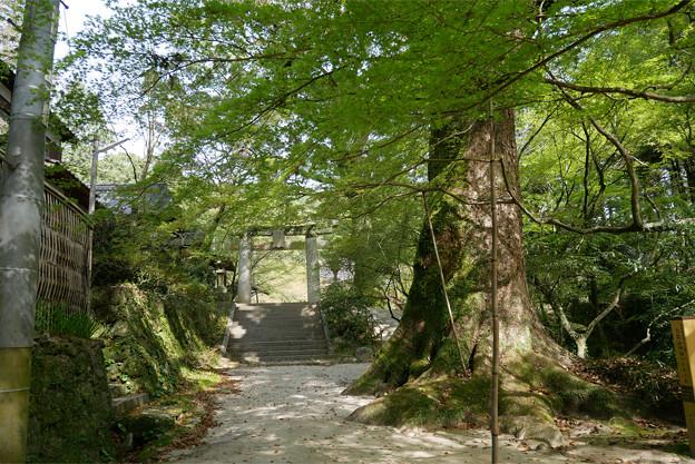 仁比山神社(7)