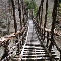 写真: 奥祖谷二重かずら橋 (2) 男橋