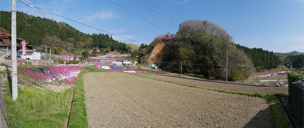 大道理芝桜まつり (14) パノラマ