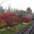 Photos: あまてらす鉄道@2014 (7)