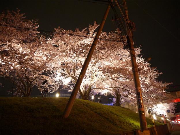 サンレイクかすやの夜桜 (1)