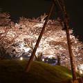 写真: サンレイクかすやの夜桜 (1)