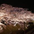 写真: サンレイクかすやの夜桜 (3)