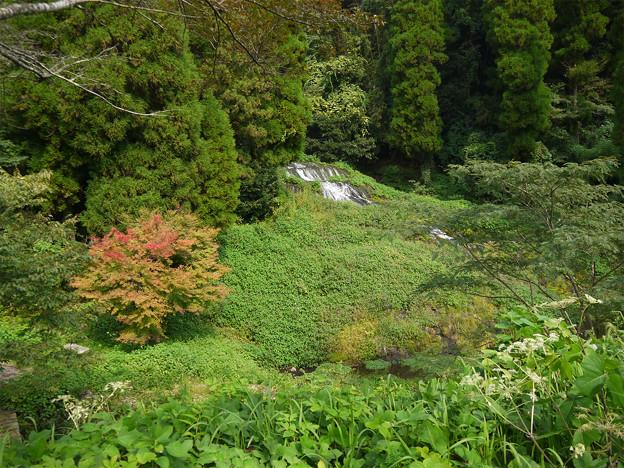 老野湧水の滝 (1)