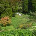 写真: 老野湧水の滝 (1)