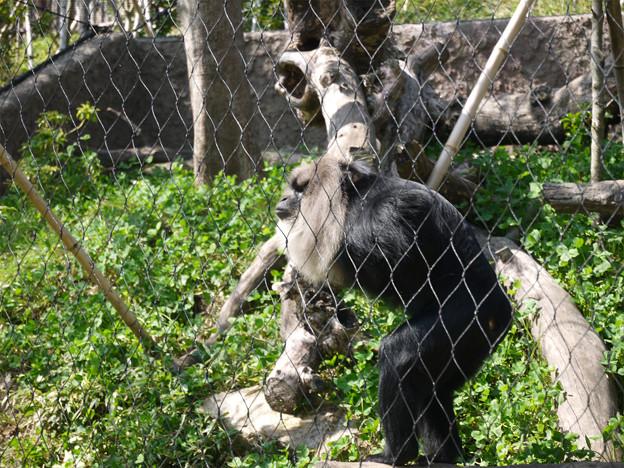 ときわ動物園 (9)