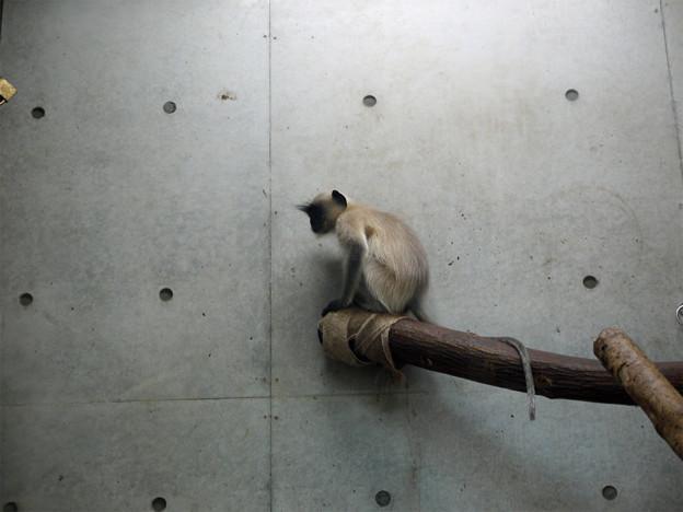 ときわ動物園 (7)
