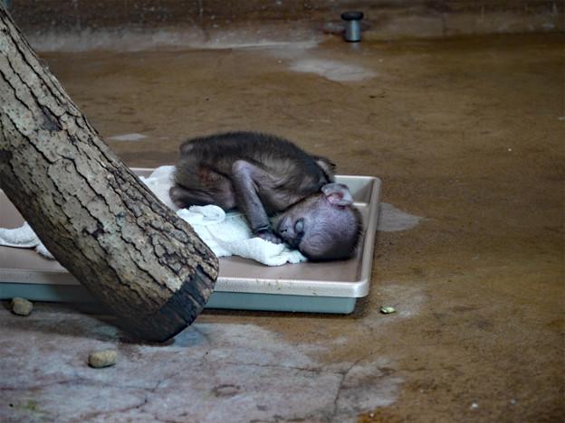 ときわ動物園 (6)