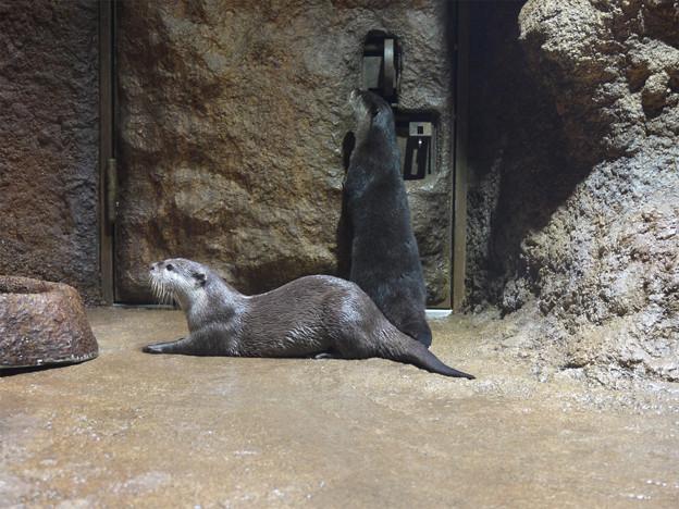 ときわ動物園 (10)