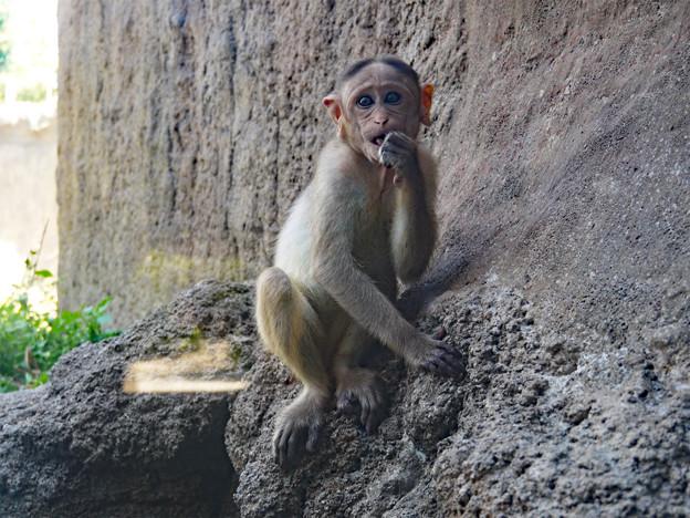 ときわ動物園 (11)