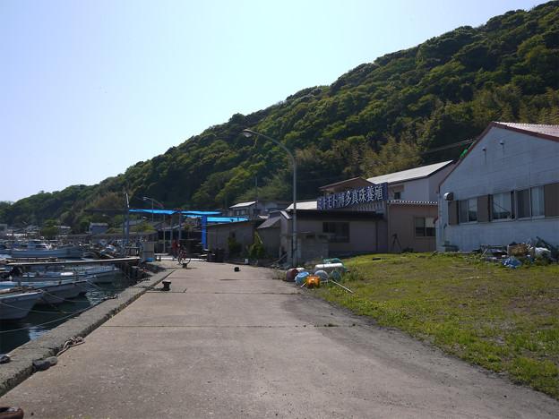 写真: 相島 (8)