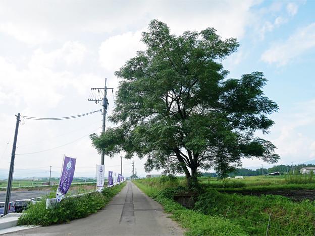 ひみつ基地ミュージアム (3)