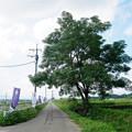 Photos: ひみつ基地ミュージアム (3)