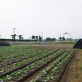 写真: 赤江飛行場の弾薬庫跡 (5)