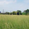 写真: 宮崎空港横の掩体壕 6号基 (7)