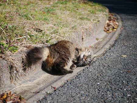 向山公園で出会ったネコさん 2