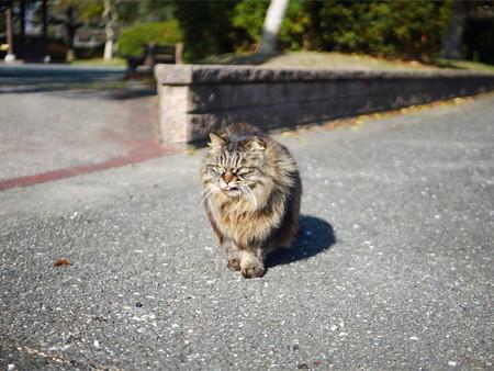 向山公園で出会ったネコさん