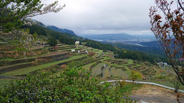 有田町国見棚田公園 (2)