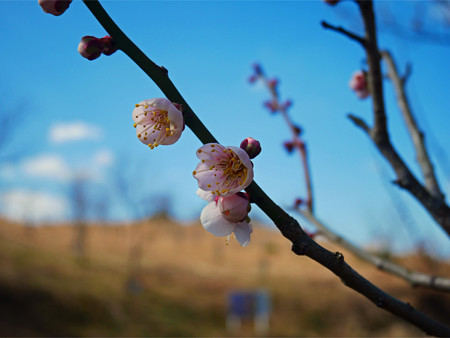 八木山花木園 (7)