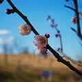 Photos: 八木山花木園 (7)