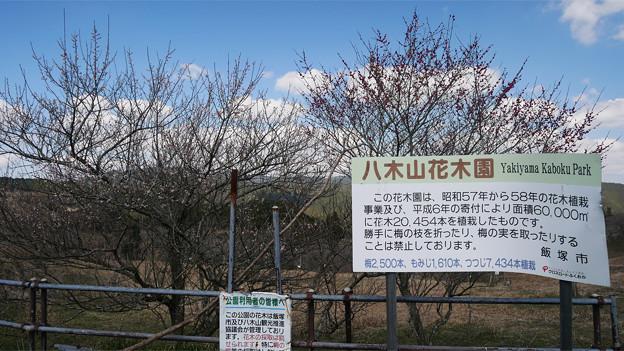 八木山花木園 (5)