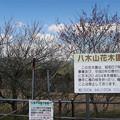 Photos: 八木山花木園 (5)