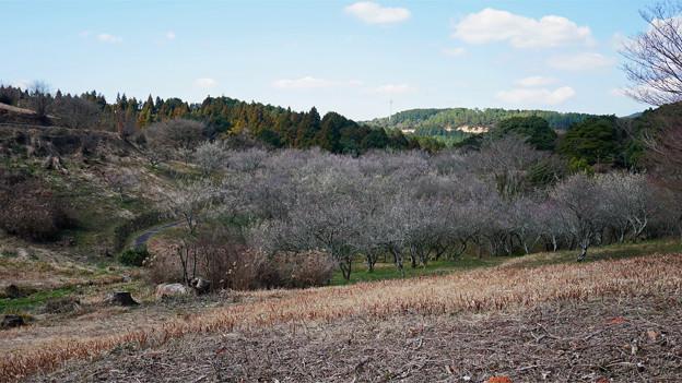 八木山花木園 (4)
