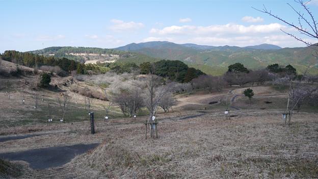 八木山花木園 (2)