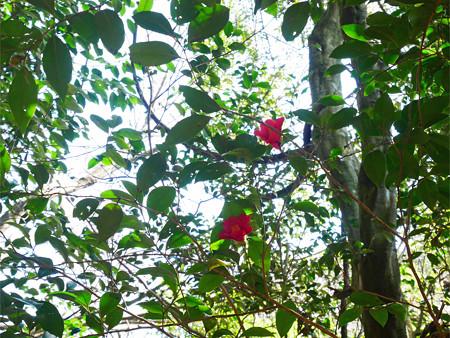 上野登山口から虎尾桜を目指す (1)