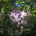 Photos: 上野登山口から虎尾桜を目指す (10)