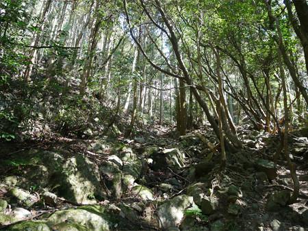 上野登山口から虎尾桜を目指す (9)
