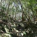 Photos: 上野登山口から虎尾桜を目指す (9)