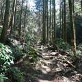 上野登山口から虎尾桜を目指す (8)