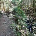 上野登山口から虎尾桜を目指す (6)