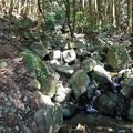 上野登山口から虎尾桜を目指す (5)