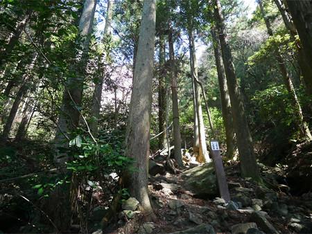 上野登山口から虎尾桜を目指す (11)