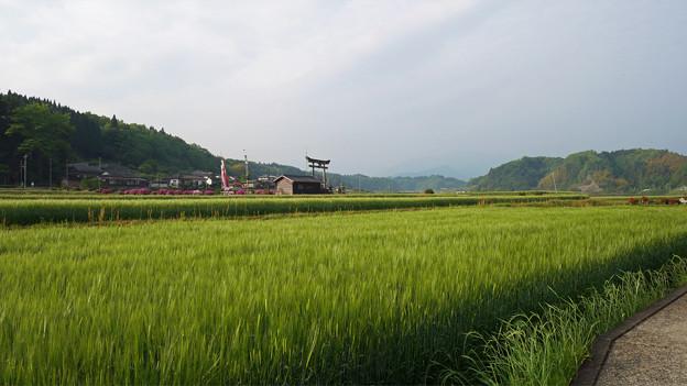 原尻の滝@2018 (4)