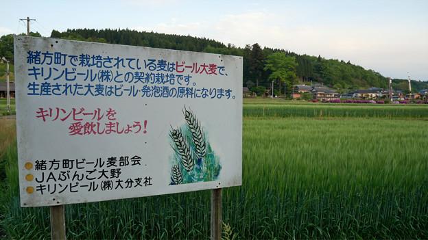 原尻の滝@2018 (14)