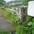 長瀬橋 (4)