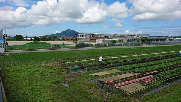 糸島市・東風小学校付近 (1)