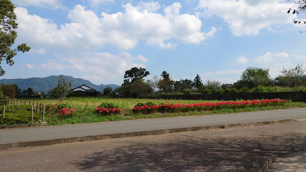 平原歴史公園の秋 (2)