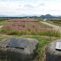 飯塚市河川敷のコスモス (6)